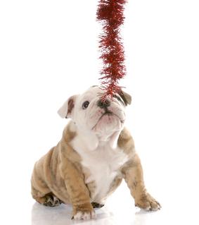 Holiday Christmas Dog and Garland 2